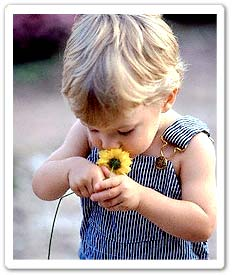 Toddler sniffing a flower