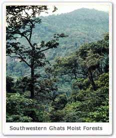 Southwestern Ghats moist forests